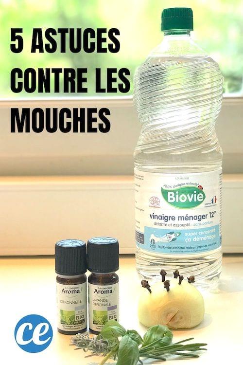 Faire Fuir Les Mouches : faire, mouches, Astuces, Finir, Mouches.