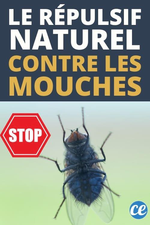 Lutter Contre Les Mouches : lutter, contre, mouches, Faire, Contre, Mouches, Répulsif, Naturel, Efficace.