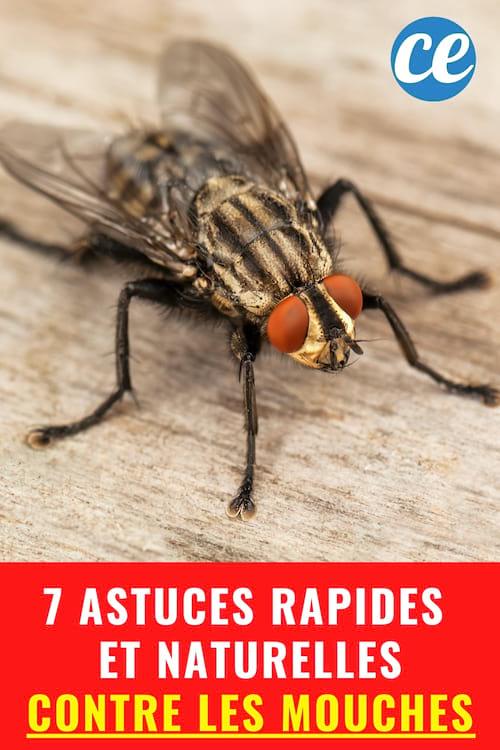 Lutter Contre Les Mouches : lutter, contre, mouches, Trucs, Rapides, Naturels, Débarrasser, Votre, Maison, MOUCHES.