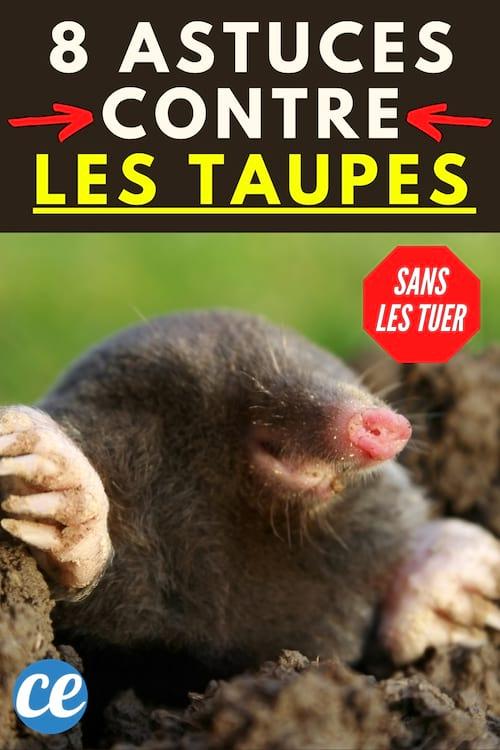 Remede De Grand Mere Pour Les Taupe : remede, grand, taupe, Taupes, Trucs, Débarrasser, Définitivement, Tuer.