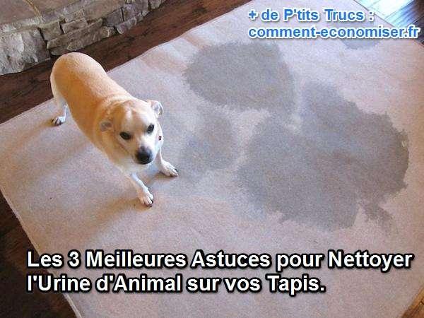 nettoyer l urine d animal sur vos tapis