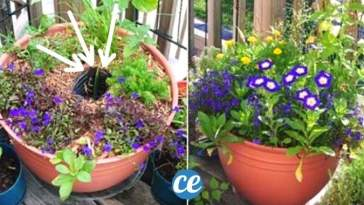 Comment Faire un Réservoir d'Eau Pour Plantes avec 1 Bouteille en Plastique.
