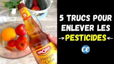5 Astuces Pour Éliminer un Maximum de Pesticides sur Nos Fruits & Légumes.
