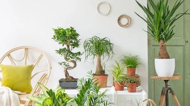 Dco Plante Appartement