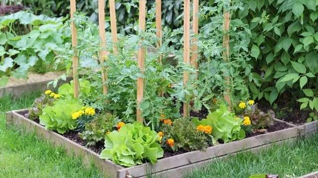 9 plantes pour potager carre cote maison