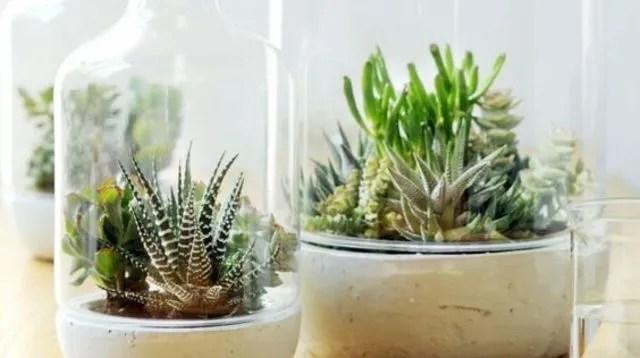 Plante dintrieur  entretien facile pas chre dpolluantes  Ct Maison