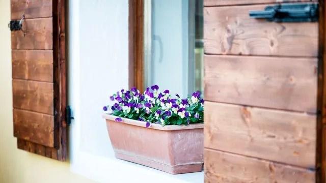 entretien jardiniere en ete cote maison