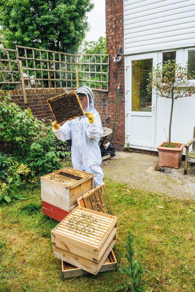 Une Ruche Dans Mon Jardin : ruche, jardin, Ruche, Abeille, Choses, Savoir, Côté, Maison