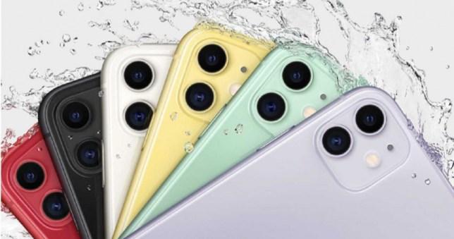 蘋果公告iPhone 11顯示器更換方案,可以透過手機序號查詢是否符合資格。(圖/翻攝自APPLE)