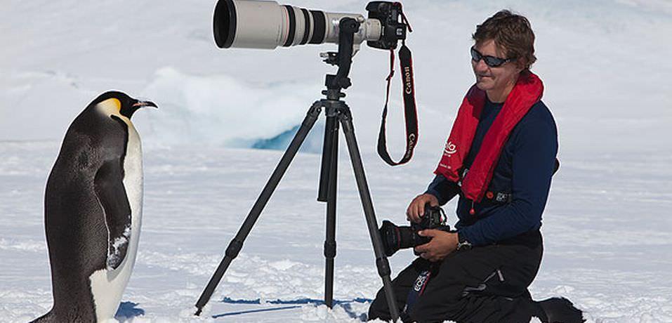 南極のペンギンたちが人懐っこすぎて可愛い | 笑うメディア クレイジー