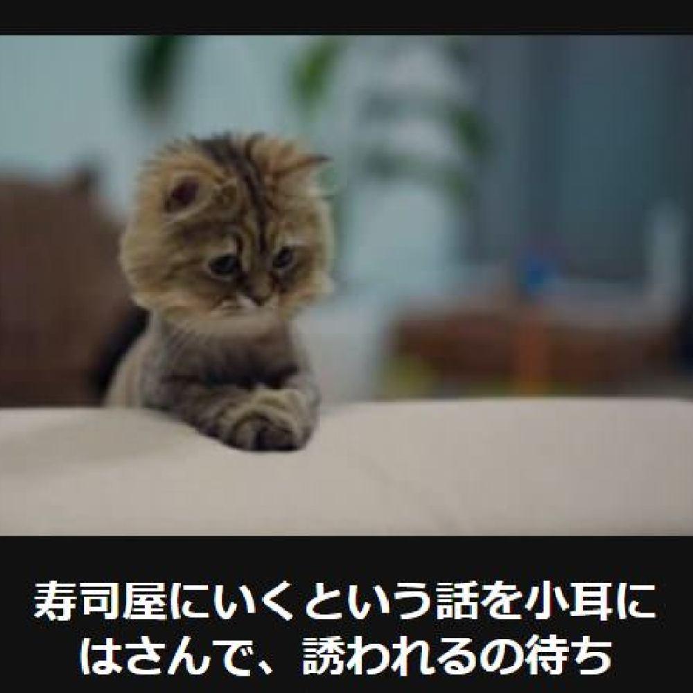 大喜利 猫4