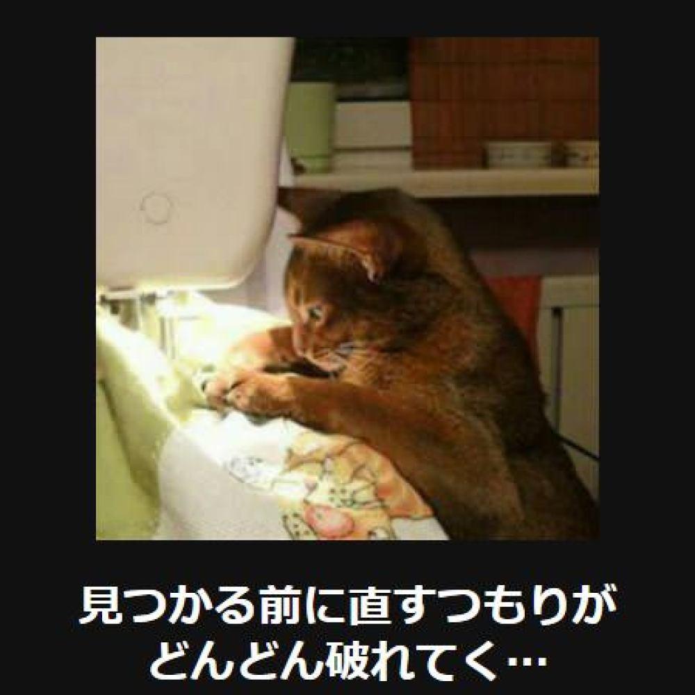 大喜利 猫2