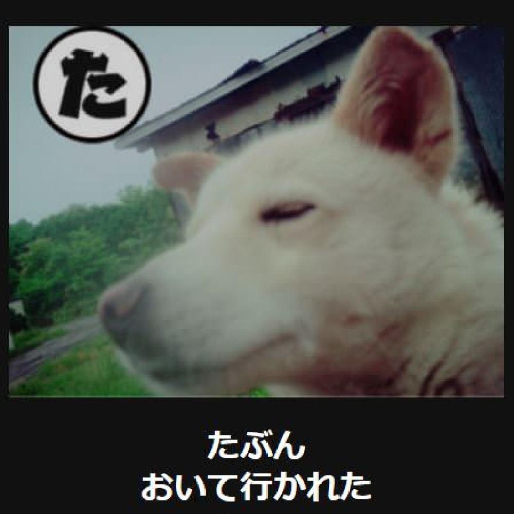 大喜利 犬9