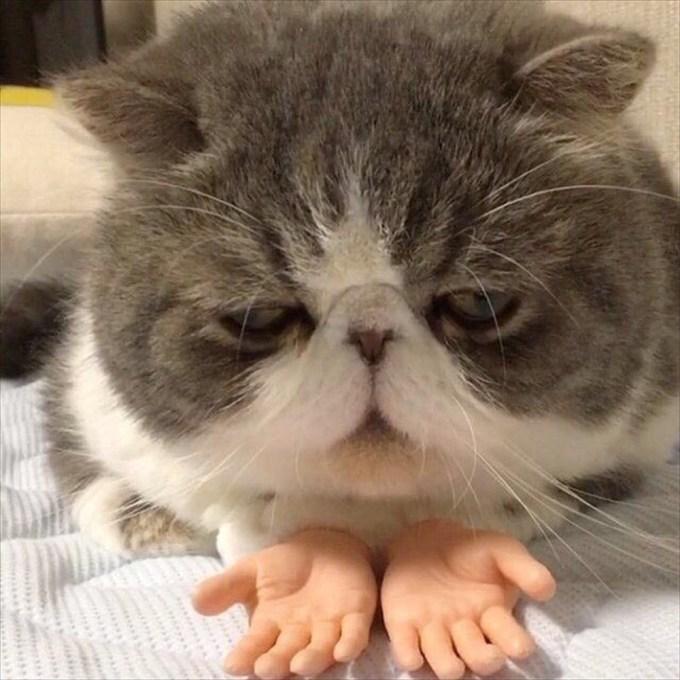 猫の手は借りずに、人の手を貸した!? 猫にオモチャの手を持たせたら妙な一体感(笑)