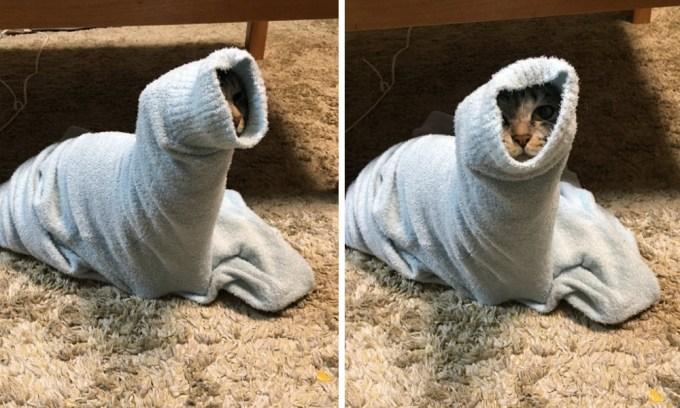 猫らしき生き物