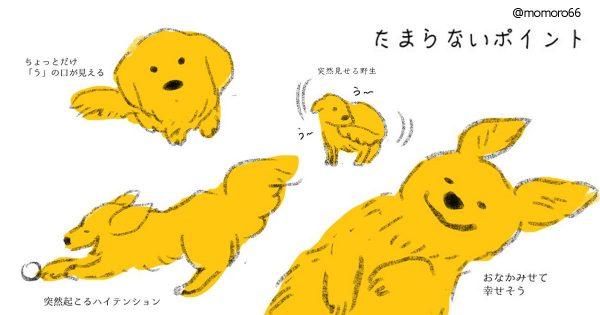 犬の可愛いポイント