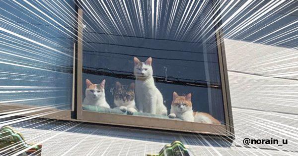 選挙カーを見つめる猫