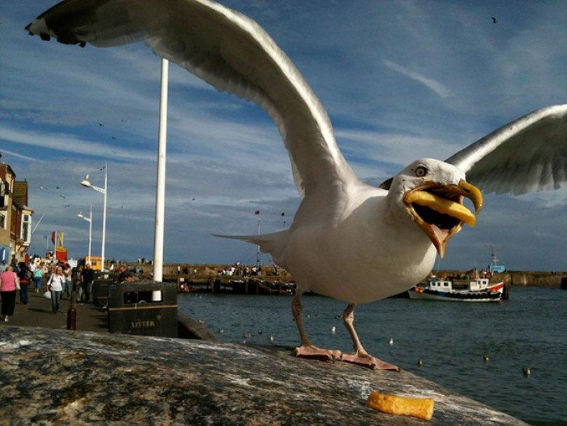 google buys seagull photo hannah huxford 9 - Já pensou ter uma foto sua comprada pelo Google? Ela conseguiu!
