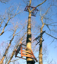 tom shields attaches discarded wooden chairs to forest trees