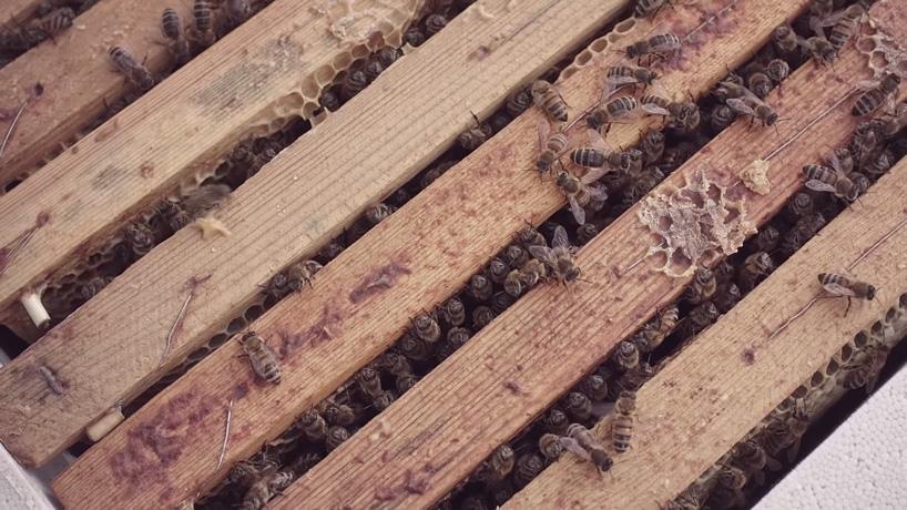 mcdonald's opens world's smallest restaurant for bees designboom mchive