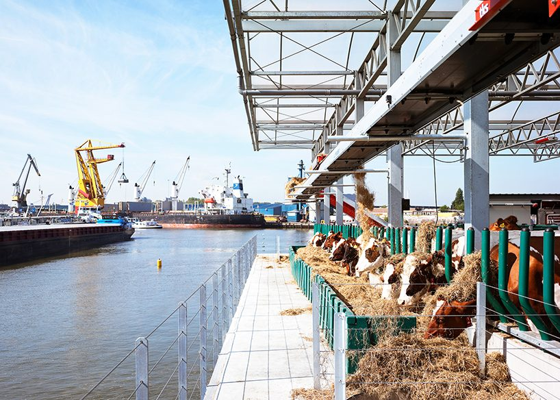 goldsmith floating farm produces, processes and distributes dairy products in rotterdam