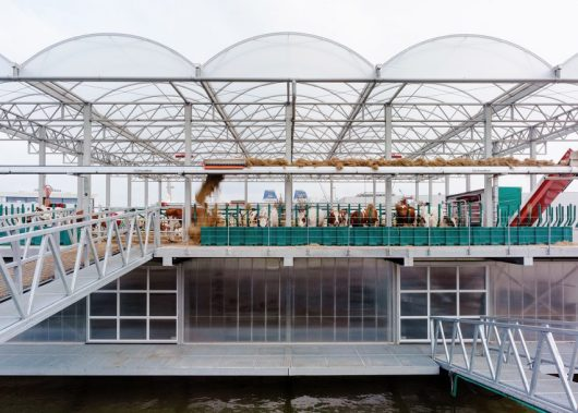 Floating Farm in Rotterdam is now home to 32 cows