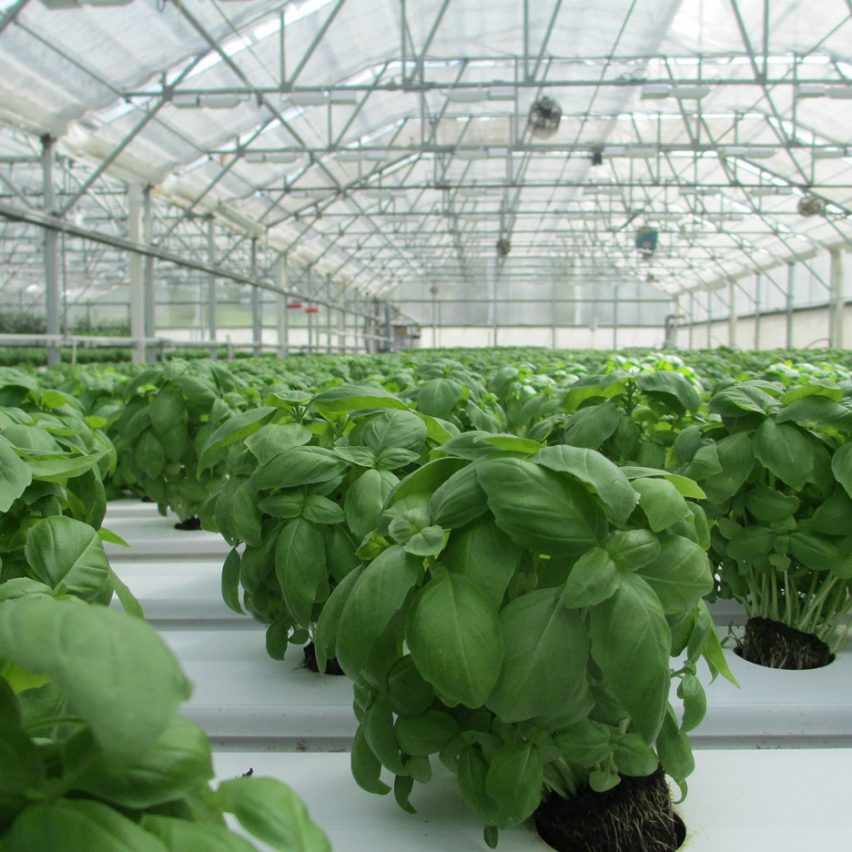Hungary plans a carbon neutral greenhouse city powered by renewable energy
