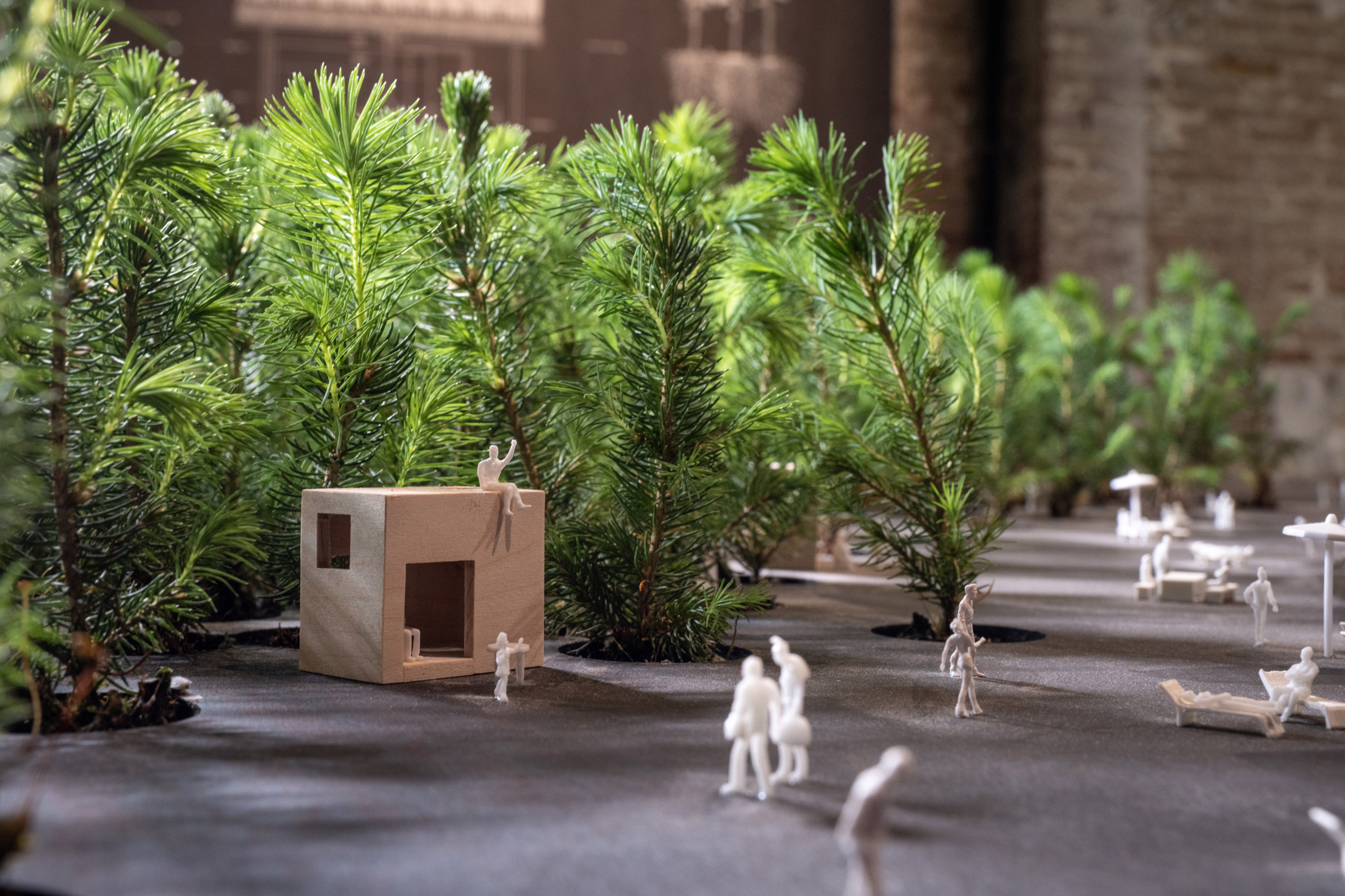 Close up of architectural models and seedlings in Venice