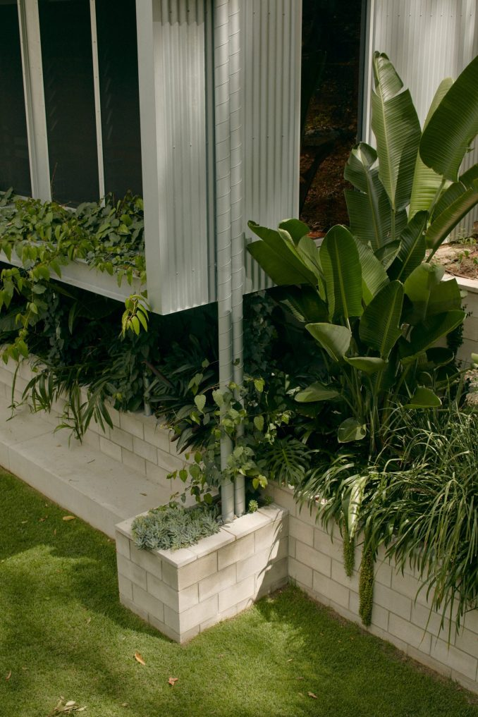 Greenery around corrugated facade of Mt Coot-Tha House