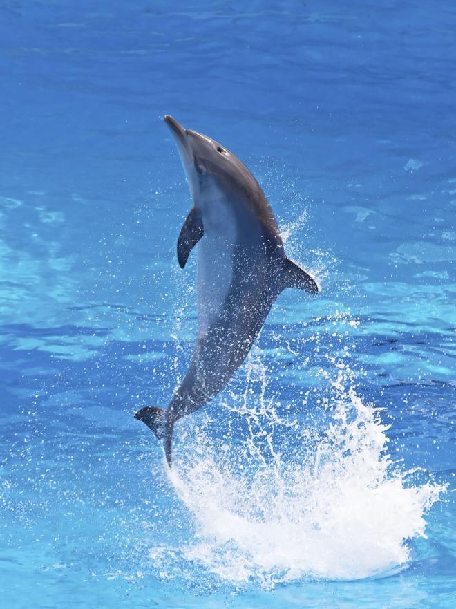 Significado de soar con delfines vas por el buen camino