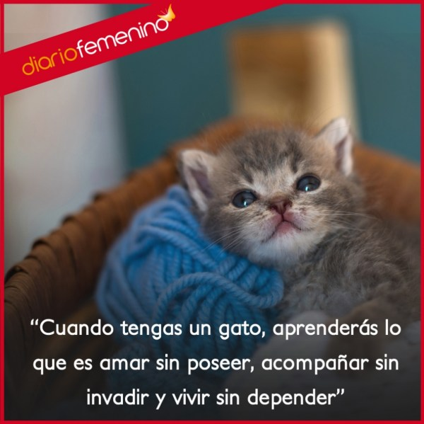 20 Frases De Amor De Gatos Pictures And Ideas On Meta Networks