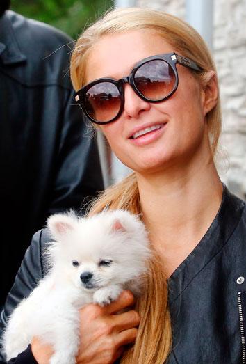 Perros de famosos Paris Hilton tambin adora a sus pomerania