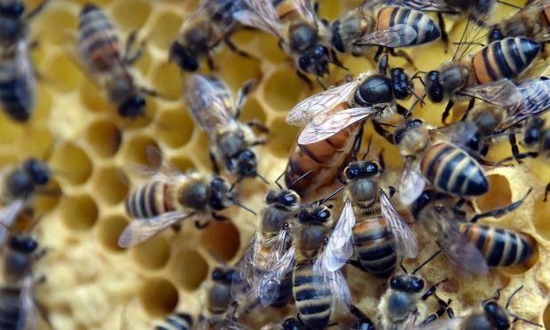 Schlangenbisse sind durchschnittlich aber tödlicher als Bienenstiche. – (c) APA/AFP/GEORGES GOBET (GEORGES GOB