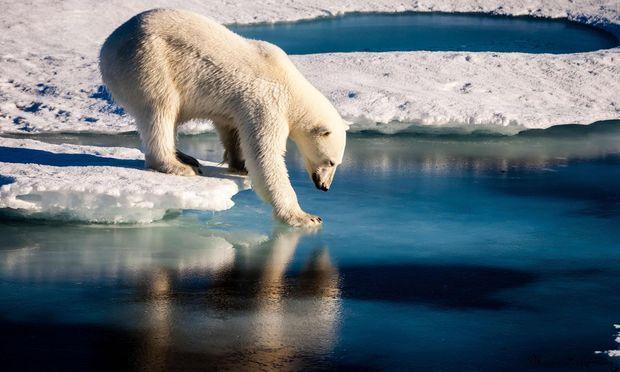 Abfälle belasten etwa auch das Territorium der Eisbären. – (c) APA/AFP/European Geosciences Union (Mario Hoppmann)