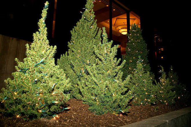 Christmas Most Trees Popular Artificial