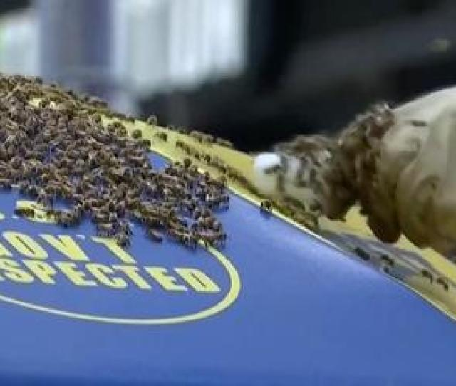 A Bee Infested Hot Dog Cart Shut Down Part Of Times Square