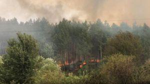 В страната бушуват пожари: пожарът в Перник се разпространи в гората край Големо Бучино