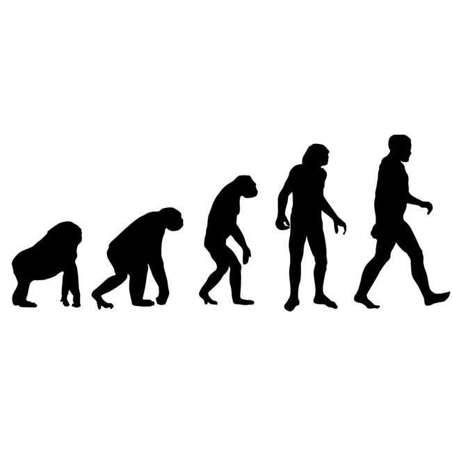 Scientists identify four stages of evolution in the human body