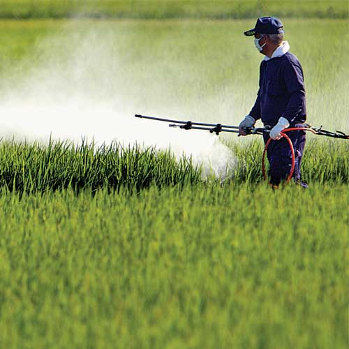 India is phasing out the use of DDT