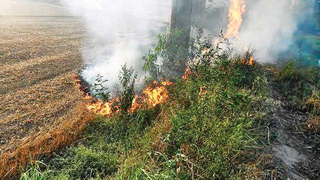Image result for Capital's air to turn toxic as crop burning will continue this year