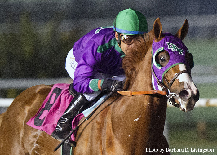 https://i0.wp.com/static.drf.com/horse/photos/california-chrome.jpg
