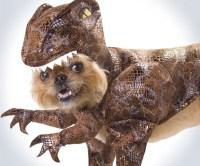 Raptor Dog Costume | DudeIWantThat.com