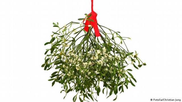 A sprig of mistletoe hanging upsidedown