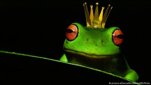 The frog prince (picture-alliance/blickwinkel/McPhoto)