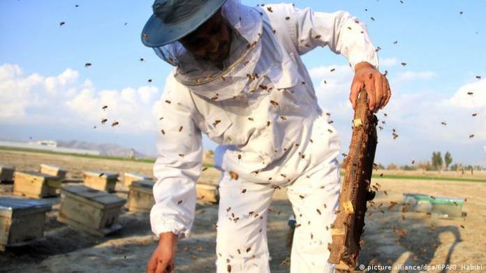 Afghansistan Bienenzucht und Honigproduktion