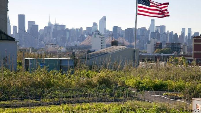 A rooftop garden with a city skyline in the background