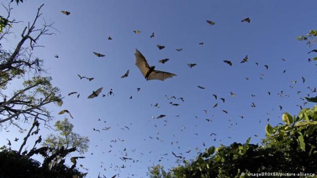 A large number of bats flying, blue skies in the background
