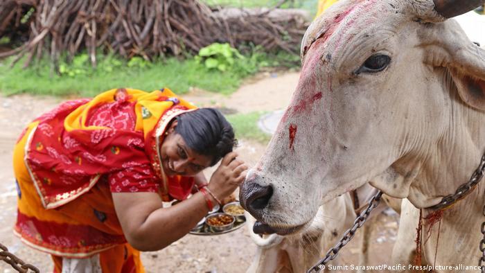 Una mujer india con un plato de comida junto a una vaca.