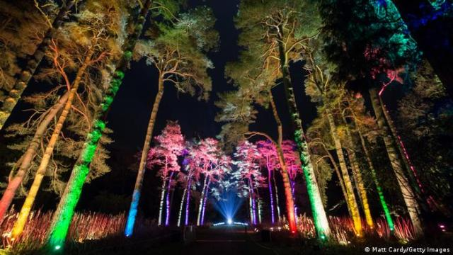 Tall trees illuminated by bright shades of green, blue and pink