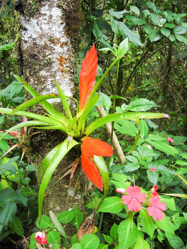 Tanaman Hidrofit : tanaman, hidrofit, EPIFIT, Definition, Synonyms, Epifit, Malay, Dictionary